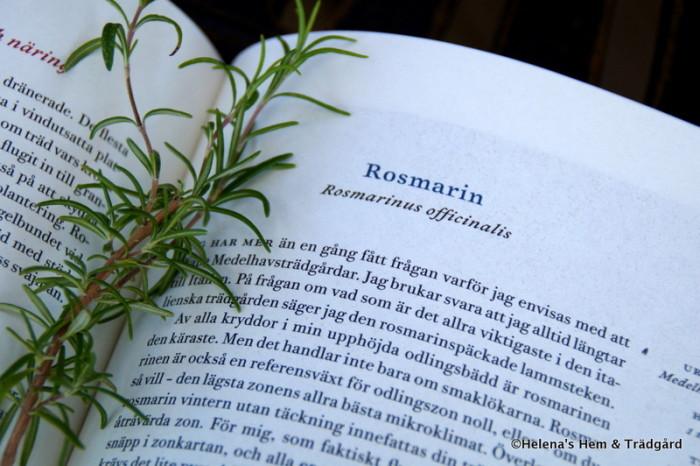 Rosmarinus officinalis Rosmarin